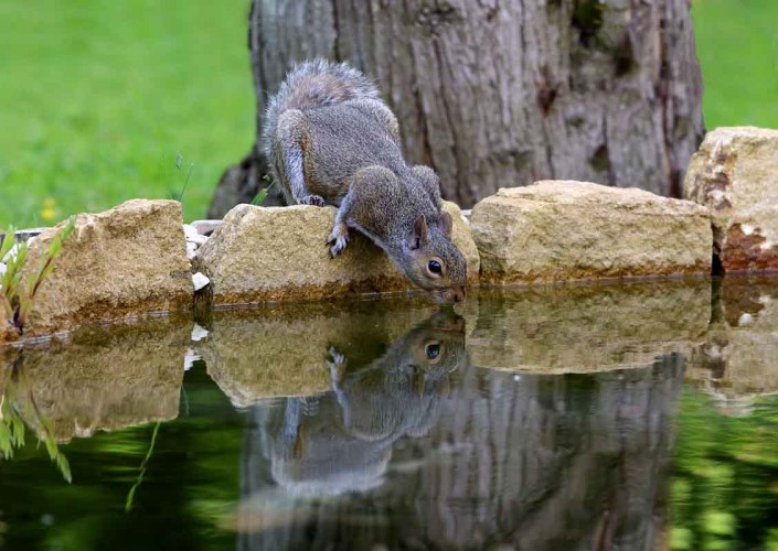 grey squirrel uk british wildlife and nature by terry bagley