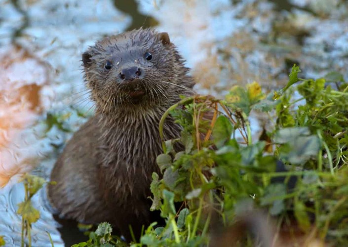 dorset otter pup british wildlife and nature by terry bagley