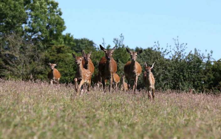 Red Deer herd by terry bagley