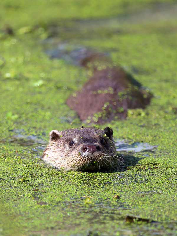 devon otter terry bagley wildlife photographer
